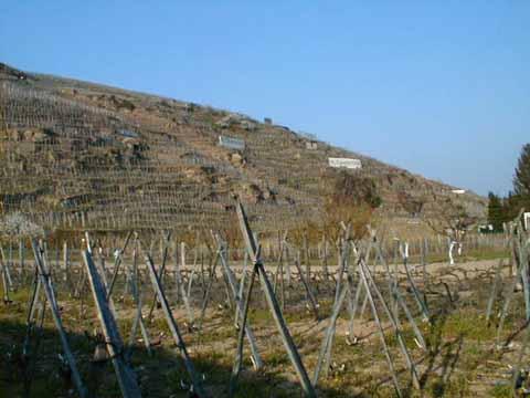 The steep vineyards of Côte Rôtie